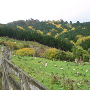 photo of forestry and sheep farming