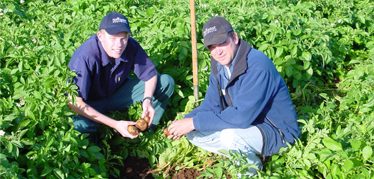 researchers in a field of potatoes