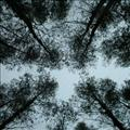 image of canopy from beneath