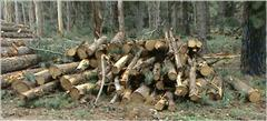 image of pile of logs