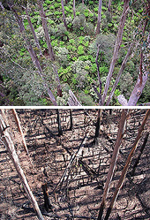 Before and after - Wallaby creek
