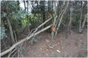 Damage to wattle trees by bait collectors
