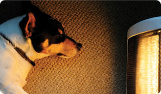 Dog in front of heater