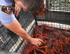 Police inspect southern rock lobster