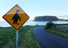 Penguin sign on the way to Stanley Nut