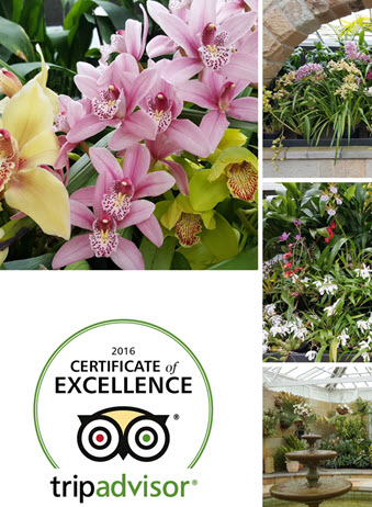 Collage-3--orchids-conservatory-Tripadvisor