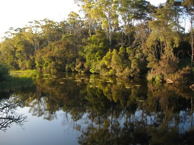 River Ecology