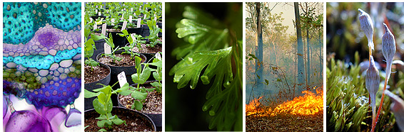 Range of Plant Science images